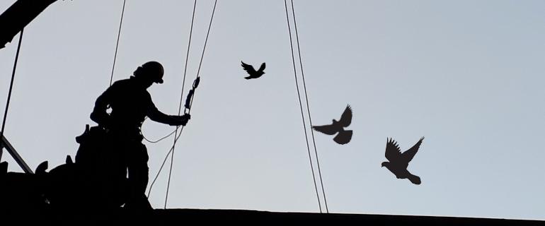 Teclimb Höhenarbeiter installiert Maßnahmen zur Taubenabwehr